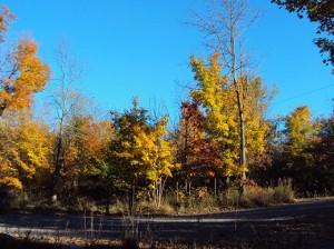 Herbstfärbung der Bäume